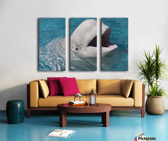 Beluga Whale In Captivity - Marineland - Niagara Falls, Ontario, Canada Split Canvas print