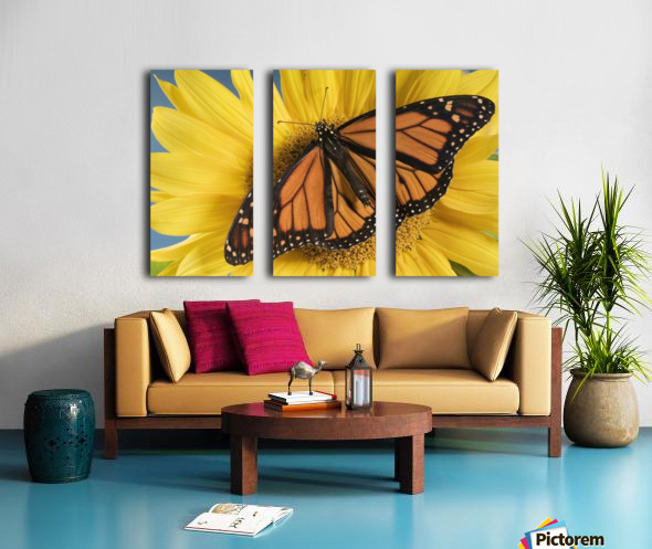 Monarch Butterfly On Sunflower. Split Canvas print