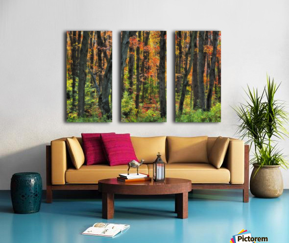 Autumn Sugar Maple, Yellow Birch And Balsam Firtrees. Algonquin Provincial Park, Ontario. Canada. Split Canvas print
