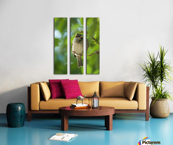 A Sparrow Perched On A Small Branch; Tarifa, Cadiz, Andalusia, Spain Split Canvas print