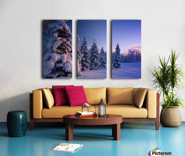 Snow Covered Spruce Trees At Sunset With Pink Alpenglow During Winter, Russian Jack Park, Anchorage, Southcentral Alaska, Usa. Split Canvas print