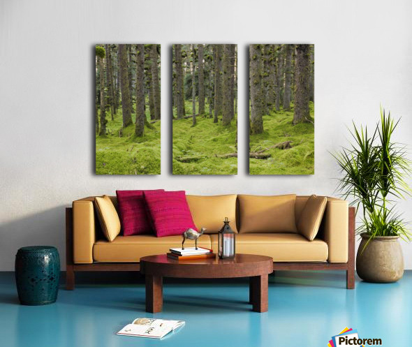 Spruce Forest & Moss Near Coast Kodiak Island Southwest Alaska Split Canvas print