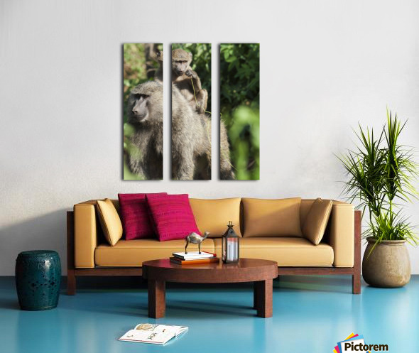 A monkey and it's baby sitting on her back in the maasai mara national reserve;Maasai mara kenya Split Canvas print