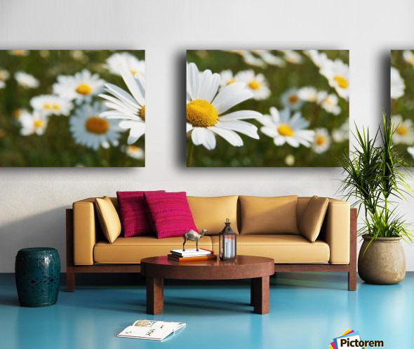 Close up of daisies in a meadow;England Split Canvas print