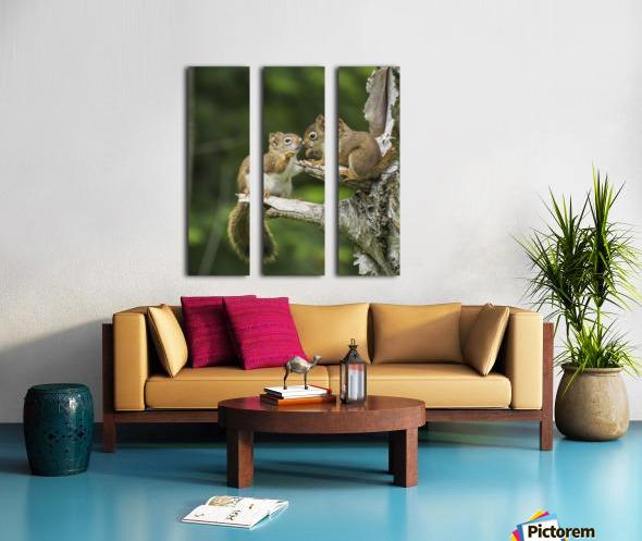 Two Red Squirrels (Sciurus Vulgaris) Playing In A Tree; Ontario, Canada Split Canvas print