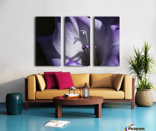 Purple gladiolus; Astoria, Oregon, United States of America Split Canvas print