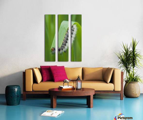 A caterpillar eats grass; Astoria, Oregon, United States of America Split Canvas print