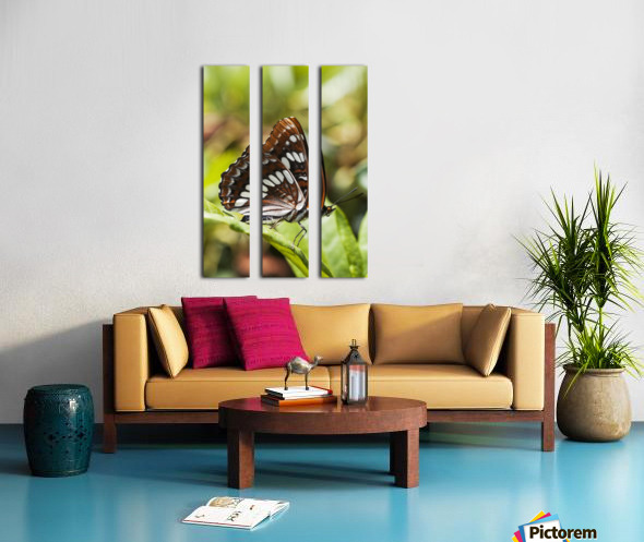 A White Admiral Butterfly (Limenitis arthemis) rests on a leaf; Astoria, Oregon, United States of America Split Canvas print