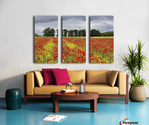 A field with an abundance of red and yellow flowers; Northumberland, England Split Canvas print