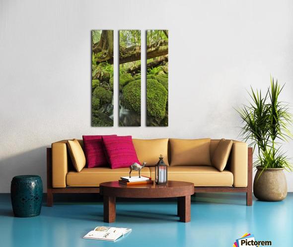 Rainforest in Avatar Grove near Tofino; British Columbia, Canada Split Canvas print