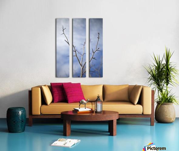 Tree with buds in springtime; Milton, Ontario, Canada Split Canvas print