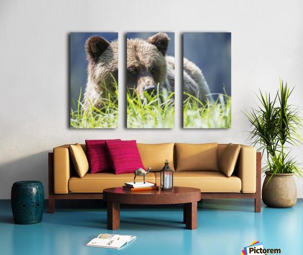 Grizzly Bear (Ursus Arctos Horribilis), Khutzymateen Sanctuary, near Prince Rupert; British Columbia, Canada Split Canvas print