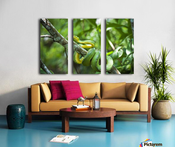 Green tree snake (Dendrelaphis punctulata); Madang Province, Papua New Guinea Split Canvas print