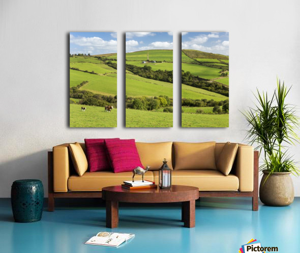 Cattle grazing on lush green hilly pastures with trees separating fields; County Kerry, Ireland Split Canvas print