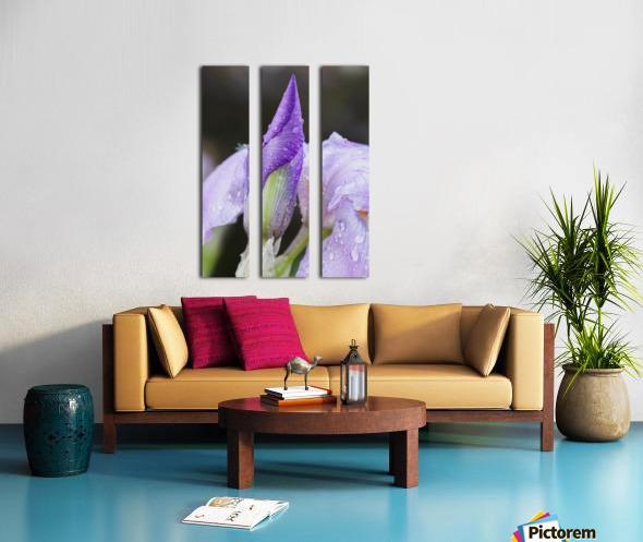 Close up of Iris; Quebec, Canada Split Canvas print