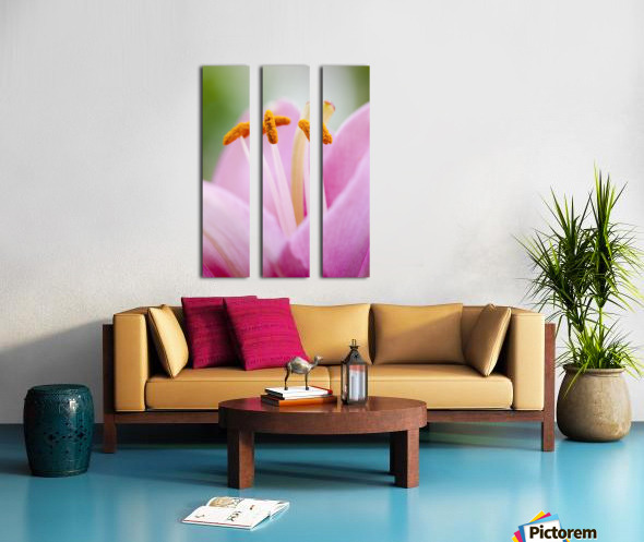 Close up of a lily; Quebec, Canada Split Canvas print
