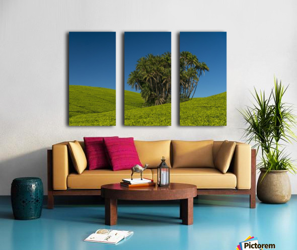 Collection of palm trees amongst hills covered in tea bushes, Satemwa Tea Estate; Thyolo, Malawi Split Canvas print
