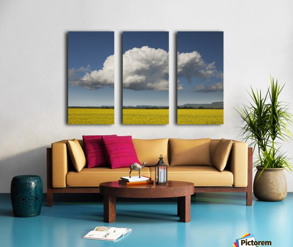 Canola field with blue sky and cloud; Thunder Bay, Ontario, Canada Split Canvas print