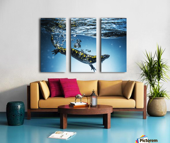 Salamander (Caudata) swimming in water; Tarifa, Cadiz, Andalusia, Spain Split Canvas print