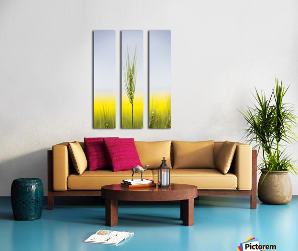 Close up of a green wheat head with the yellow colour of a flowering canola field in the background and blue sky; Acme, Alberta, Canada Split Canvas print