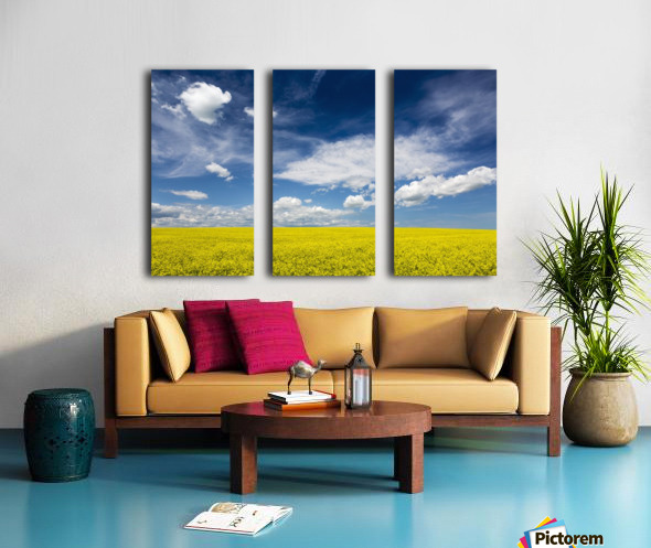 Flowering canola field with clouds and blue sky; Alberta, Canada Split Canvas print