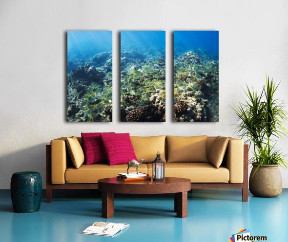 Tropical Reef in Hawaii- Split Canvas print