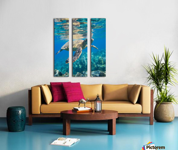 green sea turtle swimming in ocean sea Split Canvas print