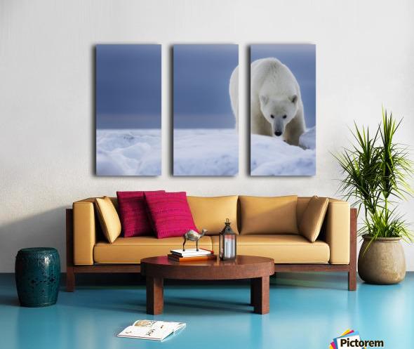 Polar bear (Ursus Maritimus); Churchill, Manitoba, Canada Split Canvas print
