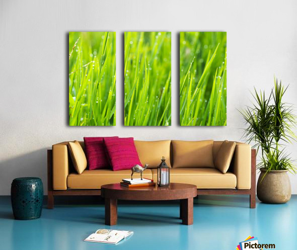 Close up of fresh grass with water drops in the early morning Split Canvas print