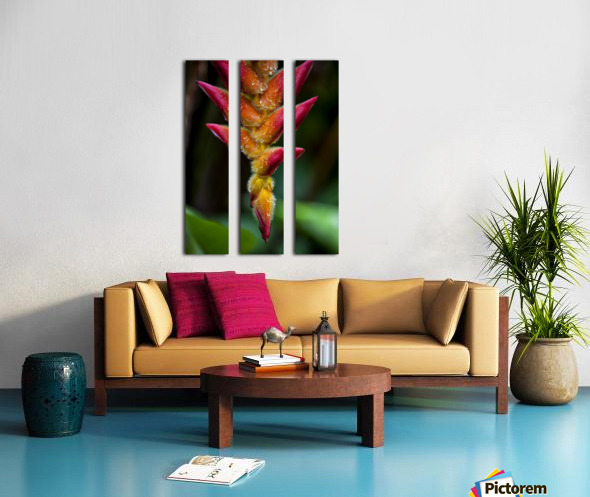 A unique tropical plant with fuzzy red and orange blossoms; Hawaii, United States of America Split Canvas print
