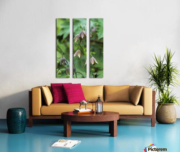 Mission Bells (Fritillaria) grow beside the trail; Hamlet, Oregon, United States of America Split Canvas print