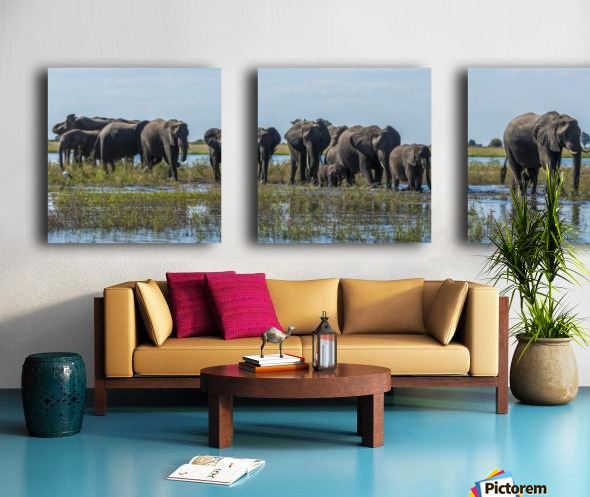 Panorama of elephants (Loxodonta africana) crossing shallow muddy river; Botswana Split Canvas print