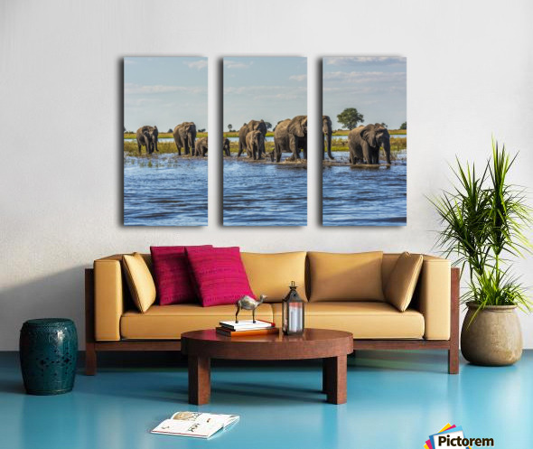 Line of elephants (Loxodonta africana) crossing river in sunshine; Botswana Split Canvas print