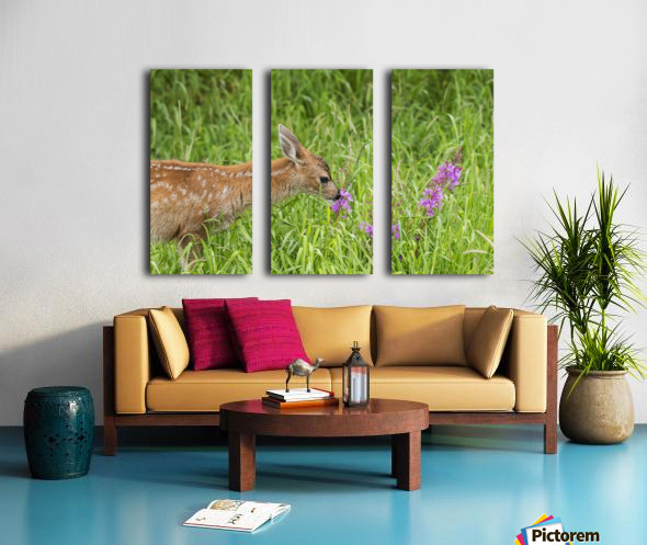 Sitka Black-tailed deer fawn (Odocoileus hemionus sitkensis) munches on fireweed (Chamerion angustifolium) in pasture, captive animal at the Alaska Wildlife Conservation Centre; Portage, Alaska, United States of America Split Canvas print