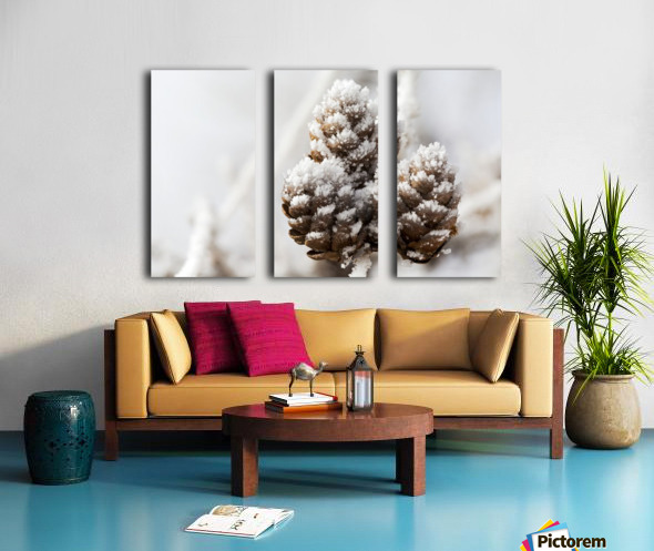 Close up of frosted pine cones; Calgary, Alberta, Canada Split Canvas print