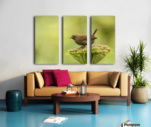 Pacific wren (Troglodytes pacificus) perched on wild celery on St. Paul Island in Southwest Alaska; St. Paul Island, Pribilof Islands, Alaska, United States of America Split Canvas print