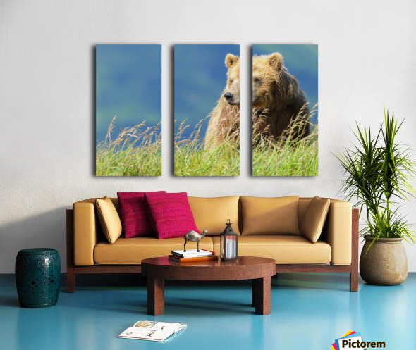 Portrait of a brown bear (portrait), Katmai National Park; Alaska, United States of America Split Canvas print