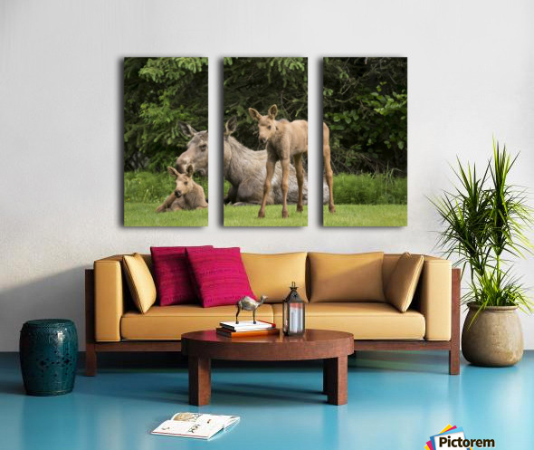 A cow moose (alces alces) relaxes on a lawn with her twin calves; Anchorage, Alaska, United States of America Split Canvas print