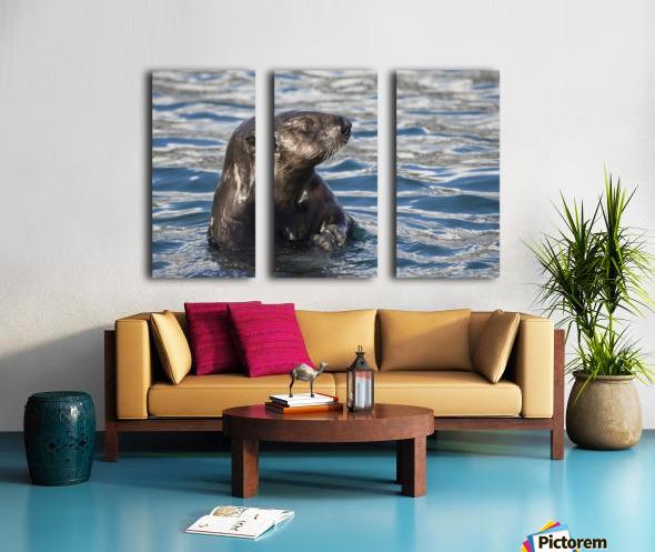 Sea Otter (Enhydra lutris) swims in Resurrection Bay near Seward small boat harbour in south-central Alaska; Seward, Alaska, United States of America Split Canvas print