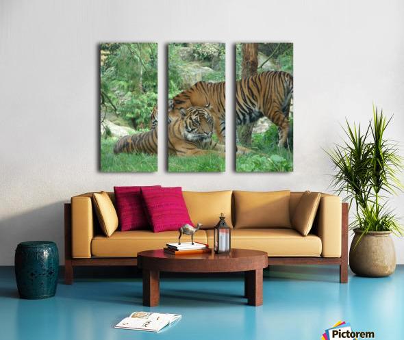 Tigers Split Canvas print