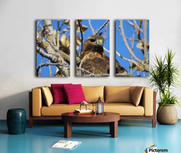 Golden Eagle VP3 Split Canvas print
