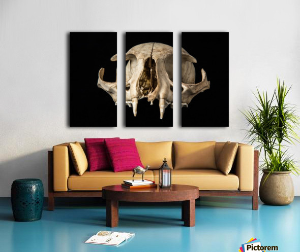 Bobcat Skull Split Canvas print