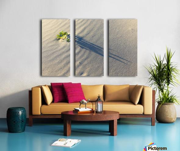 Evening Shadows on Dune Split Canvas print