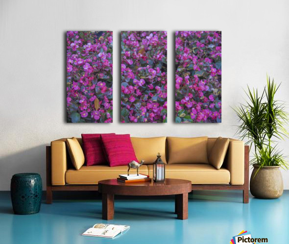 Bubble Gum Begonia Split Canvas print