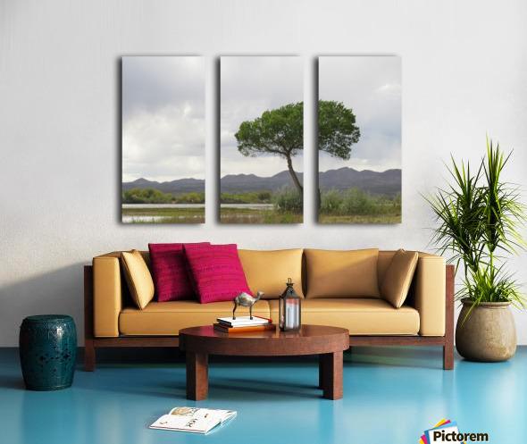 Tree at the Bosque de Apache Wildlife Sanctuary VP1 Split Canvas print