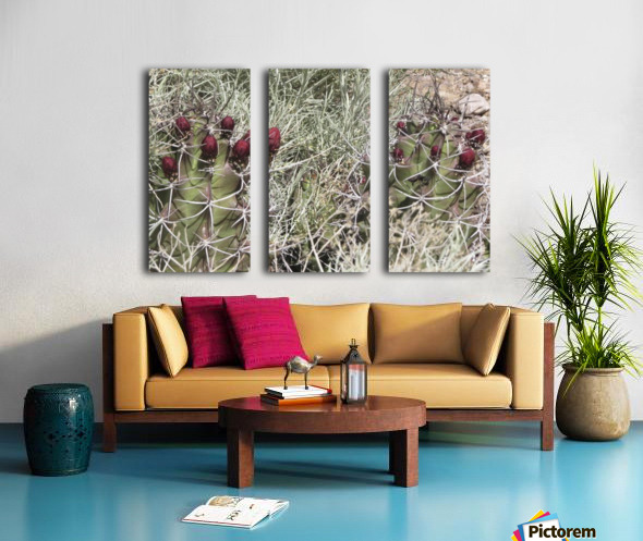 Cactus Flower VP2 Split Canvas print