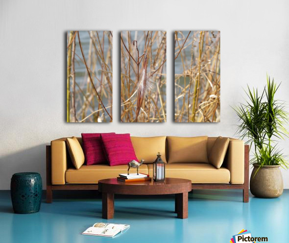 Feather in Reeds at the Glenn VP3 Split Canvas print
