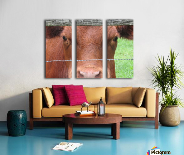 Cow in Stevenson, MD VP 2 Split Canvas print