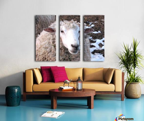 Lamb in the Winter VP1 Split Canvas print