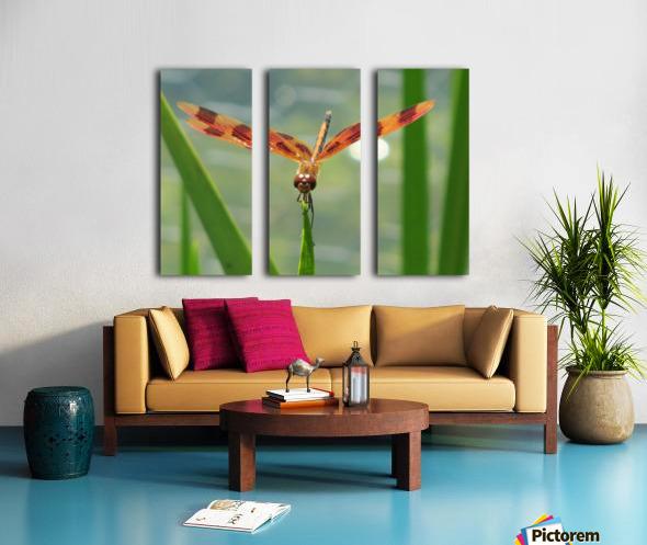 Dragonfly in Lincoln Park VP1 Split Canvas print